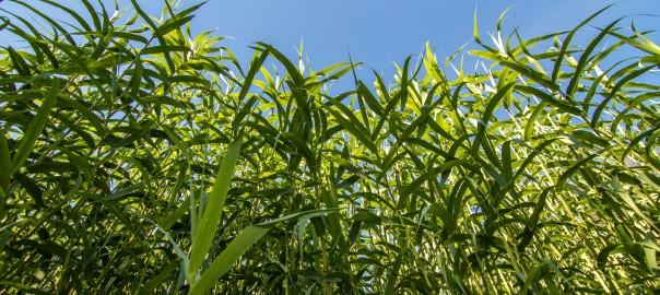¿El futuro o el presente de la calefacción son los eco-pellets? - Blog - Energy Biomasa